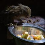 "Fotospaziergang ""Tierfotografie im Tiergarten Worms"""
